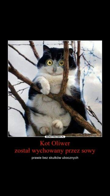 kot Oliwer wychowany przez sowy