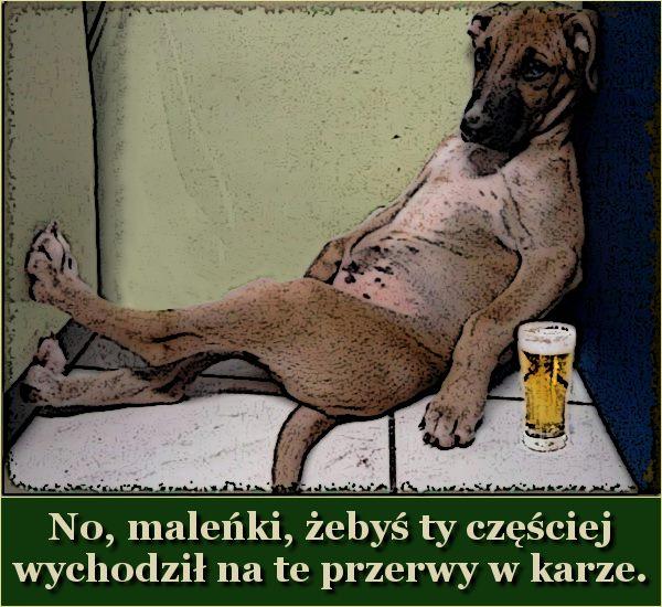 pies mem Jurka do absurdu sobotniej nocy