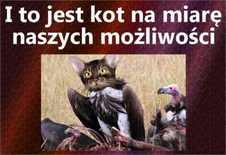 Kot na miare naszych mozliwosci