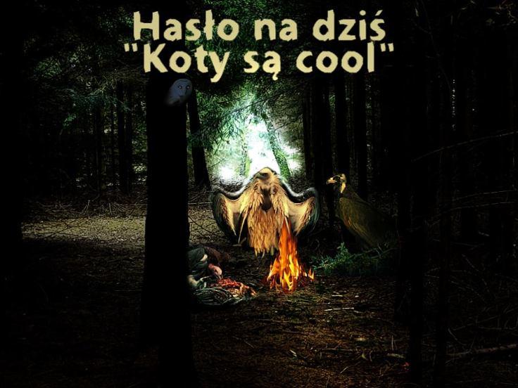 Koty sa cool 2