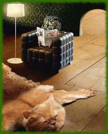 sowa i kot
