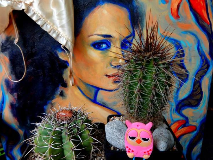 Sankja kaktusy